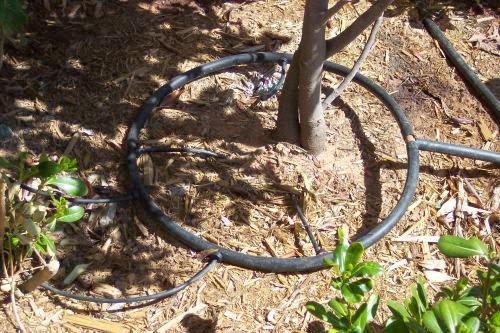 Drip irrigation company ny