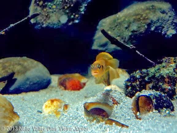 """""""The rocky habitat covered with sediment"""" Proxy?url=http%3A%2F%2F4.bp.blogspot.com%2F-UVjt9zwJb_Q%2FUvZf7oCQidI%2FAAAAAAAABas%2FRUnlW6MNfDA%2Fs1600%2F1453"""
